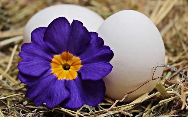 Можно ли беременным вареные яйца