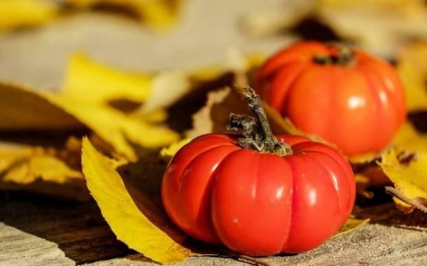 Красные помидоры и осень