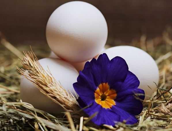 Три яйца и цветок