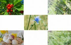 Полезные травы для сердца и сосудов