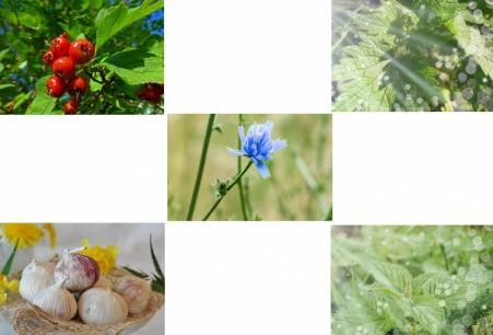 Полезные травы для сердца и сосудов |medsovet103.ru