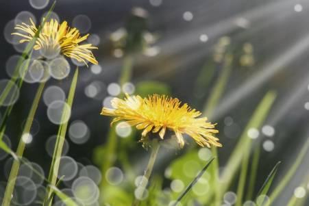 Травы для лечения мочевого пузыря у женщин